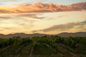 02Jun2015090603blenheim_vineyards2.jpg