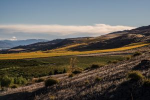 07Jun2015030614Central Otago Landscape.jpg